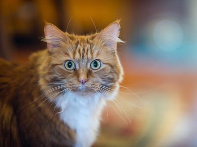 100410_Nat's-Cats_22
