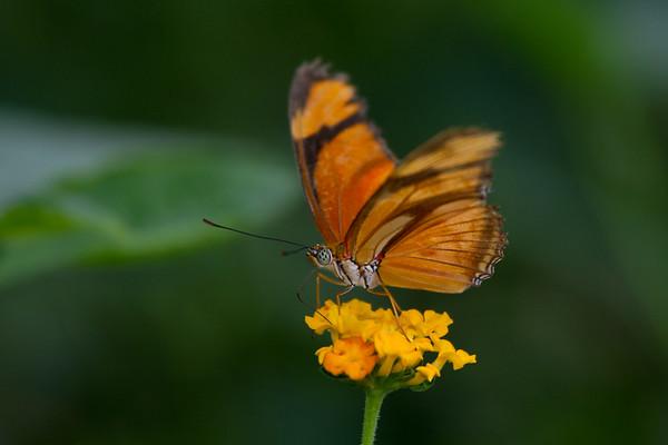 Sensational Butterflies