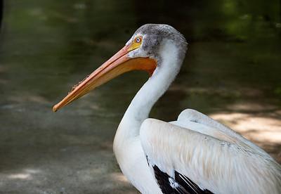 Flamingo Gardens 7-27-17