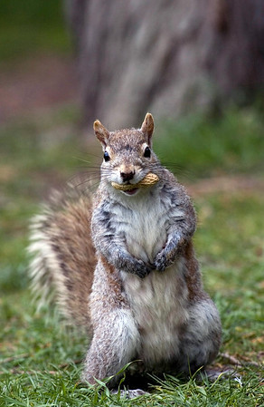 Nature Stock Photography - Squirrels & Chipmunks