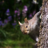 squirrel - funny animal pictures - Nature Stock Image by Professional Nature Photographer Christina Craft