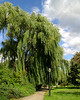 "<font color=""blue""><b>NEW!</b></font> 1380-A weeping willow tree <a href=""http://www.cwcphotography.com/gallery/1199387"">(8x10)</a>"