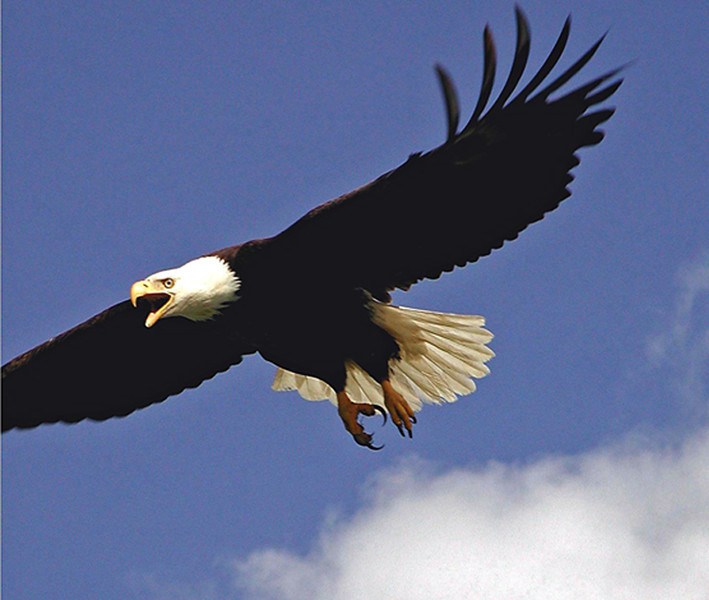 FLYING_EAGLESM