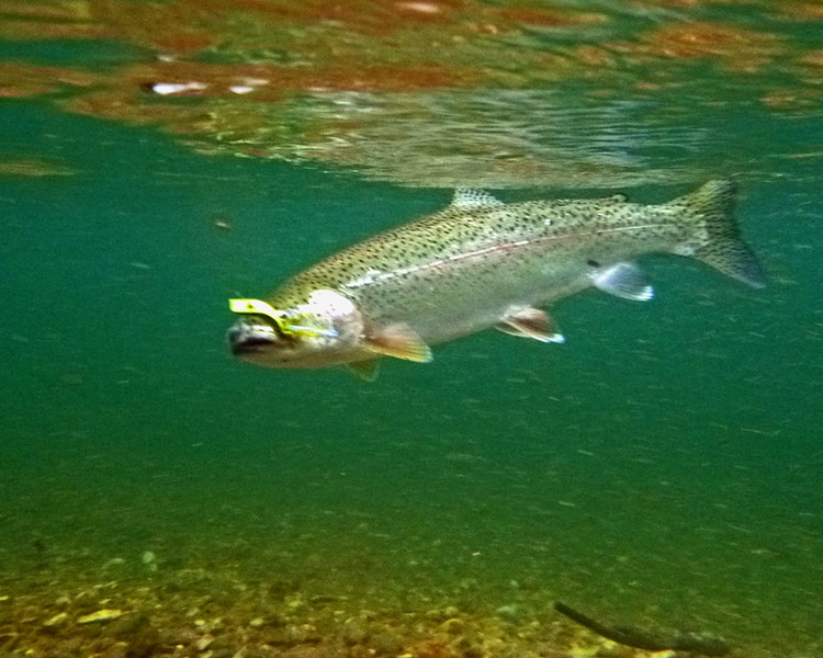 Another underwater shot.
