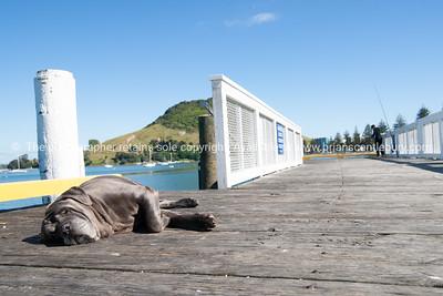 Asleep on Coronation Pier
