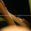 Tree frog on water plant