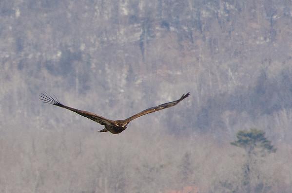 Great Eagle Day - Wabasha Minnesota Area