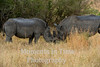 Rhino white (Ceratotherium simum)