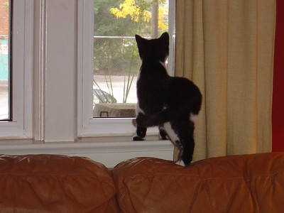 What's out there?