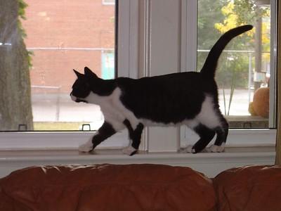 On the window ledge