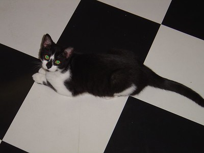 Blending in with the kitchen floor