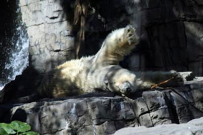 New York City Zoo's