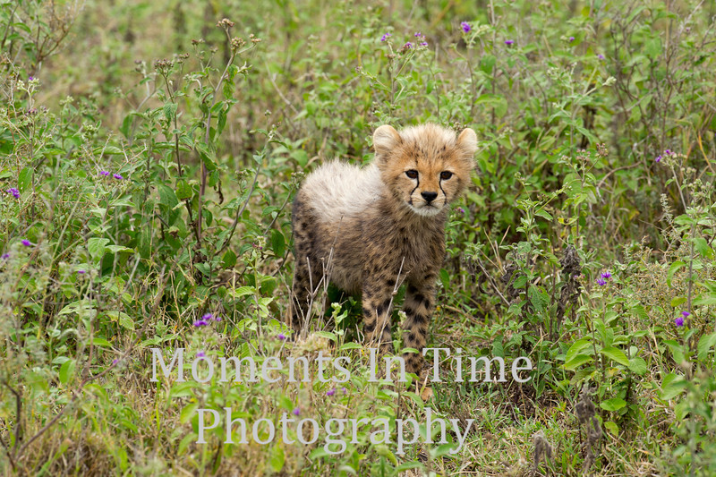 single cub facing forward