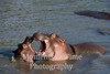 Two hippos mouths wide upen