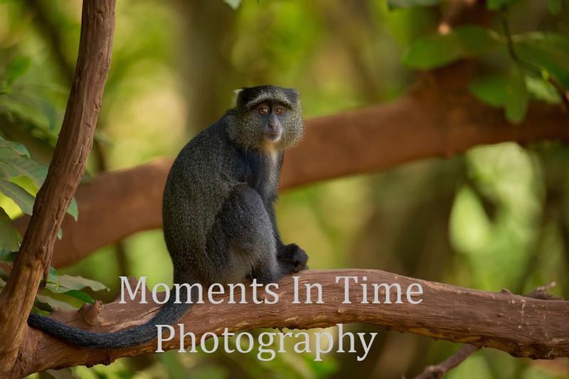 monkey on tree limb