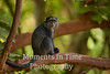 monkey on tree limb