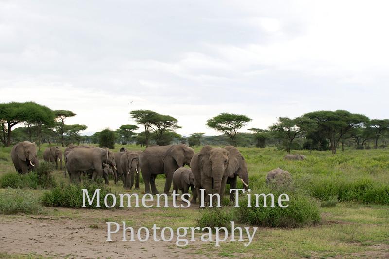 herd approaching camnera