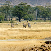 There were a variety of ecosystems within the Ngorogoro caldera. Plains, soda lakes, rivers, forested areas...