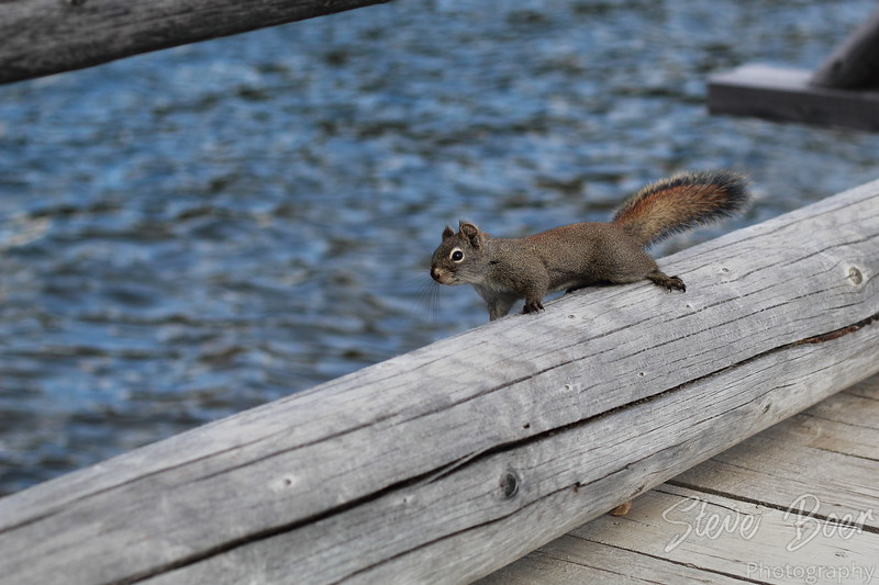 Squirrel on bridge