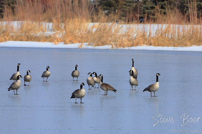 On Frozen Pond