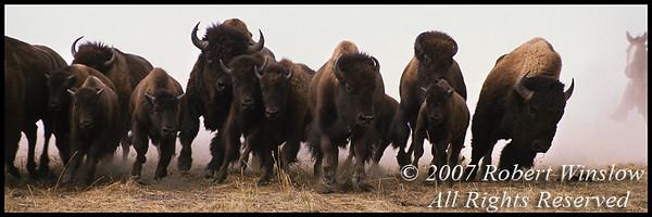 Buffalo 12x36W8C