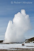 Bison, Old Faithful Geyser, Winter, Yellowstone National Park, Wyoming, USA, North America