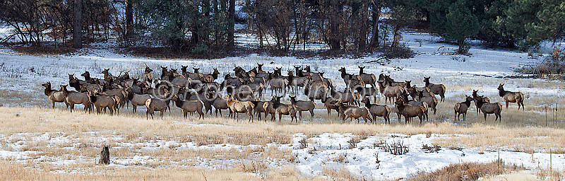 Winter, Elk, La Plata County, Colorado, USA
