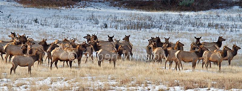 Winter, Elk, La Plata County, Colorado, USA