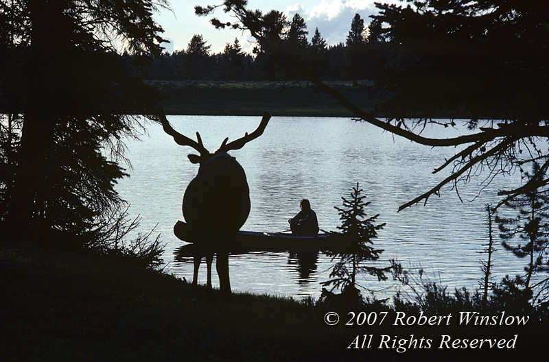 Bull Elk (Cervus canadensis), Canoer, Yellowstone National Park, Wyoming, USA