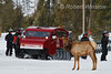 Elk, Snowcoach and Snowmobilers on Road near Madison, Winter, Yellowstone National Park, Wyoming, USA, North America