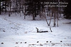 Rose Creek Pack, Eight Gray Wolves (Canis lupus), Lamar Valley, Winter, Yellowstone National Park, Wyoming, USA, North America
