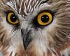 Rockingham Bird Club trip, 11-7-16
