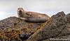 Lounging Seal