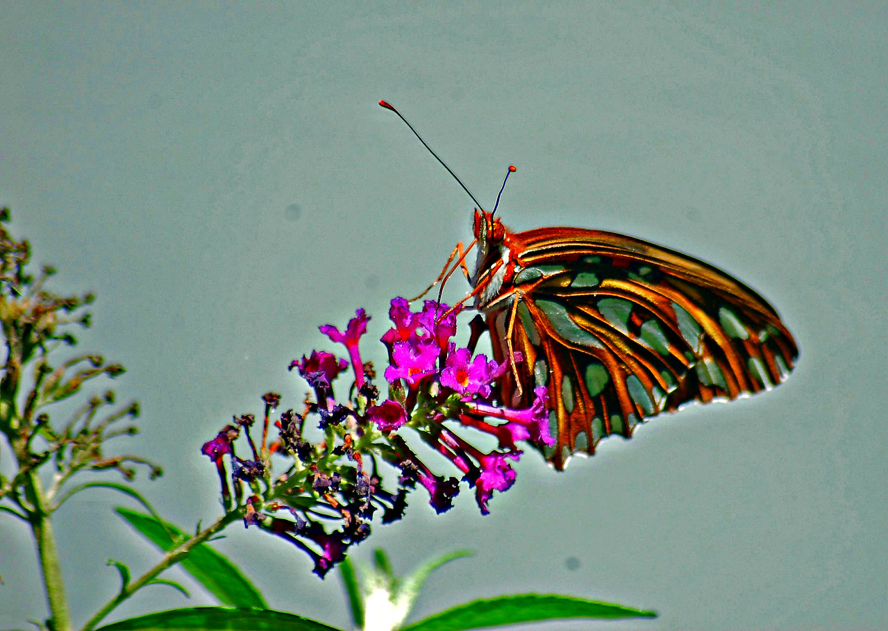 buterfly8_edited-2
