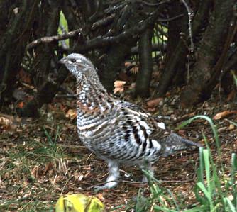 October: birds at my feeder