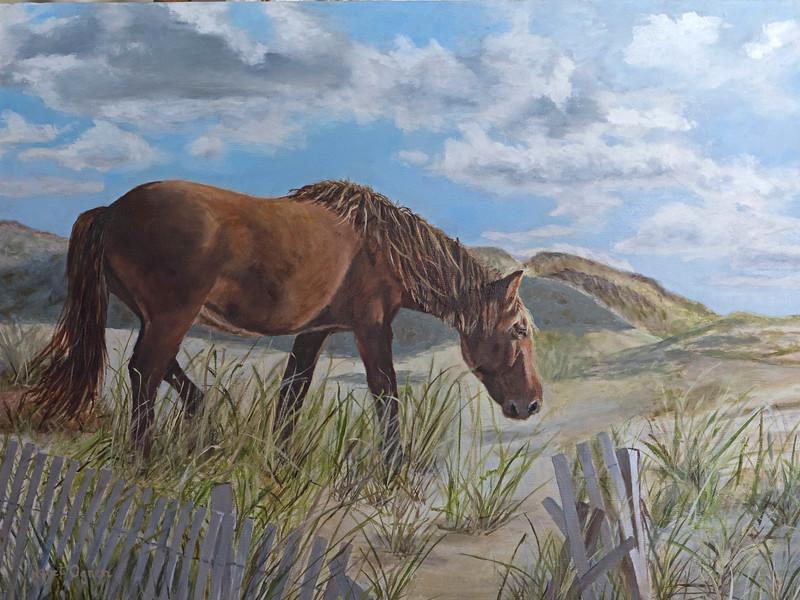 Corolla Horse on Dune