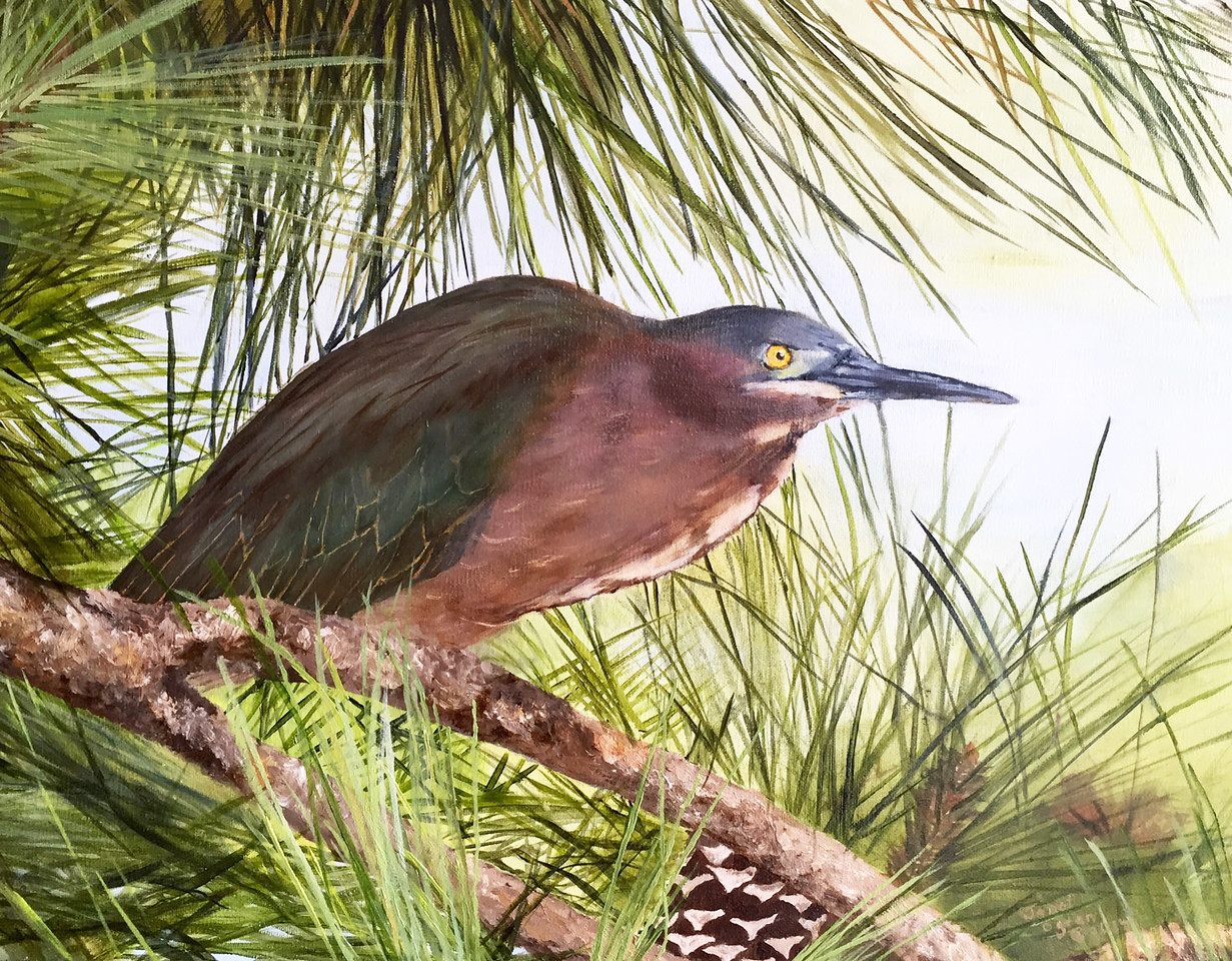Green Heron and Pine