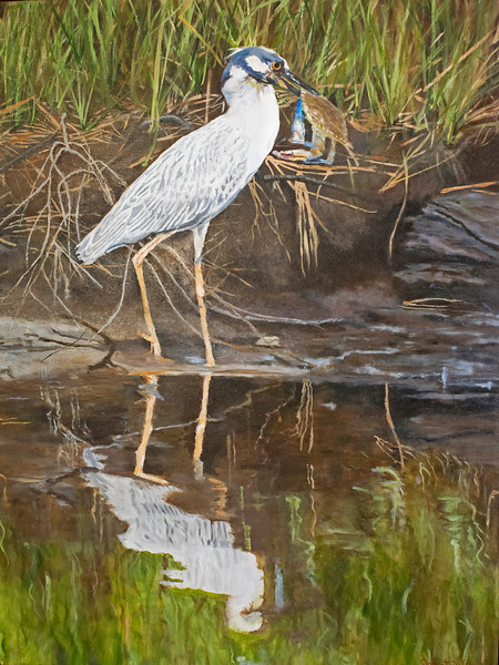 Night Heron with Blue Crab