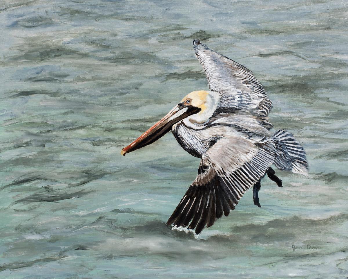 Pelican's Flight
