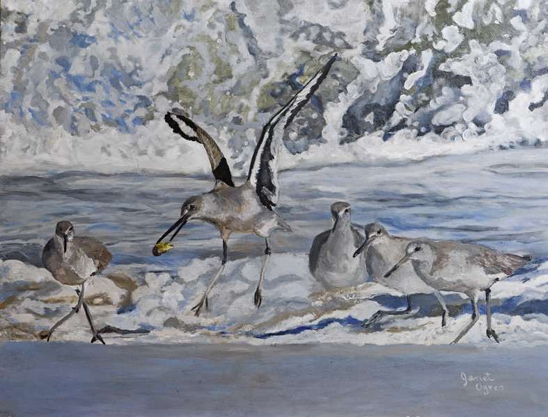 Willets in the Waves