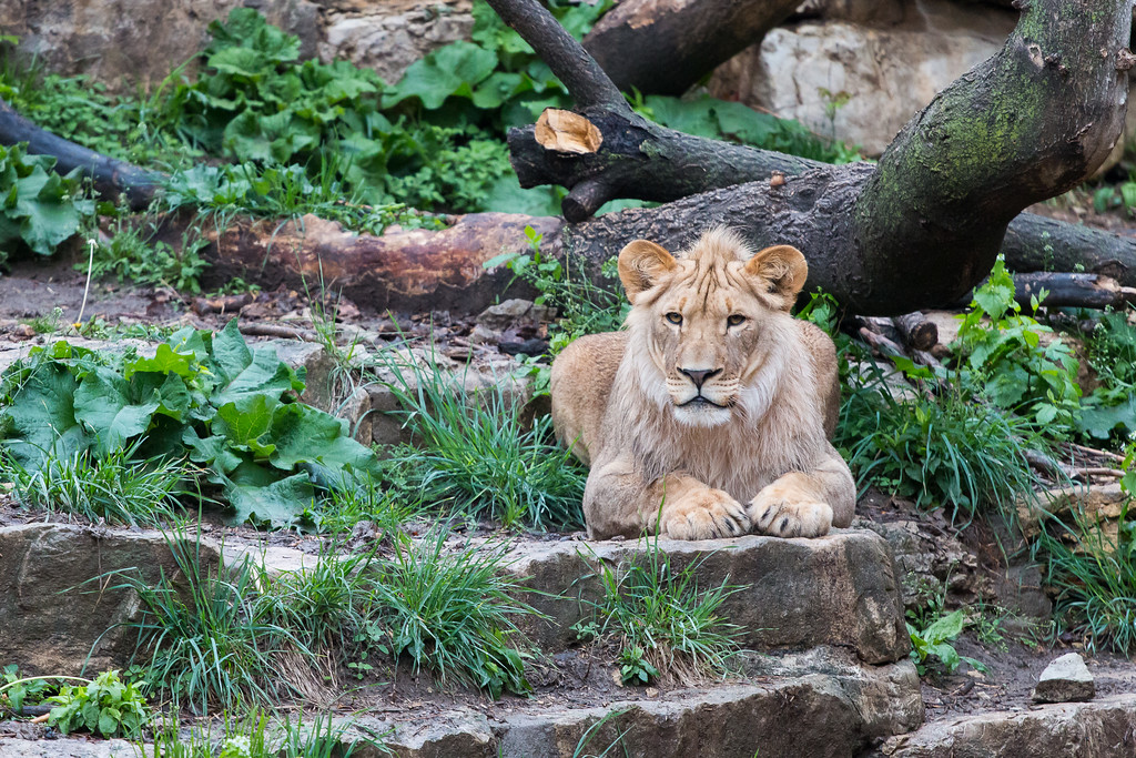 IMAGE: https://photos.smugmug.com/Animals/Omaha-Henry-Doorly-Zoo/i-H3V8kQK/0/XL/IMG_4906-XL.jpg