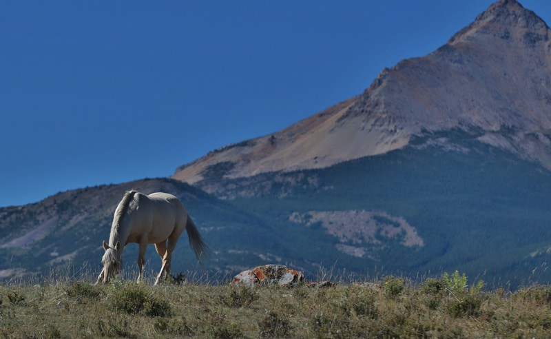 On The Border Horses