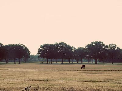 Lone Cow - Lake Fork, Texas  Order Code: A32