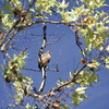 Hawk at Del Valle, encircled by a wreath of leaves.<br /> (EBRPD)