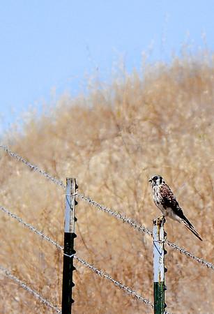 Kite? on the trail.<br /> (EBRPD-Del Valle)