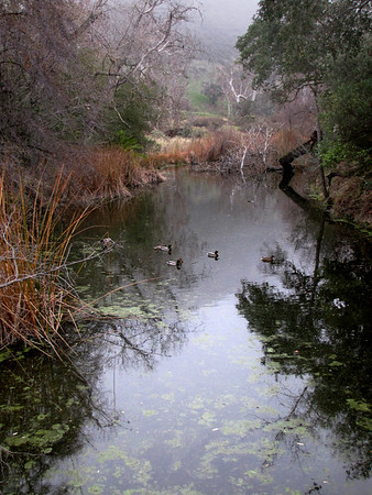 16-  OG - Creek at Arroyo Road Trailhead to Del Valle.<br /> (EBRPD)