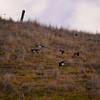 Magpies <br /> (EBRPD-Del Valle)