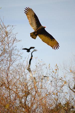 Del Valle - Vultures Circling (EBRPD)