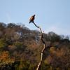 At Sunol.... Golden Eagle I believe. (EBRPD)
