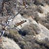 Del Valle 2012 - Original - Hawk at dam.